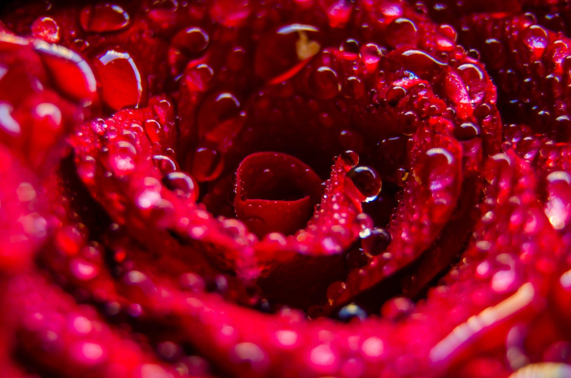 abstract art beautiful bloom