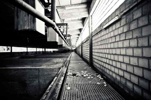 grayscale photography of a pathway
